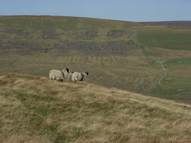 Sheep on Moss Moor