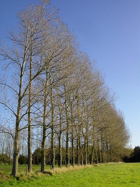 Poplar row, Gresham