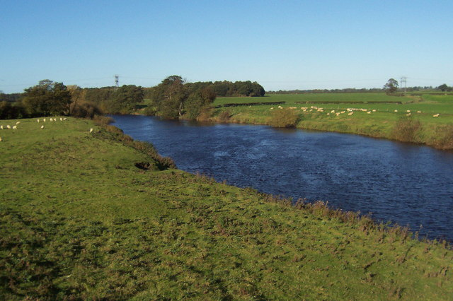 River Ure, Roecliffe