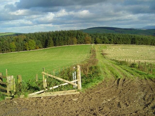 Grass track northeast of Wolfelee Hill