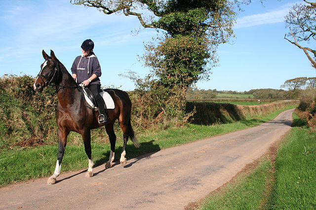 Witheridge: horse and rider