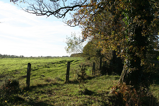 East Worlington: by Affeton Moor Cross