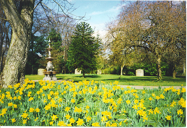 Daffodils, Hazlehead