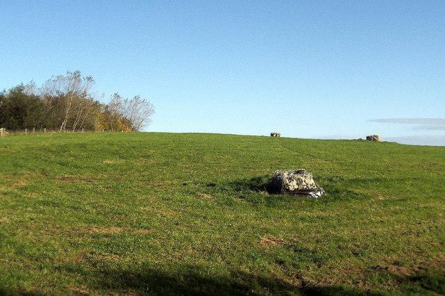 Field, Wallerthwaite