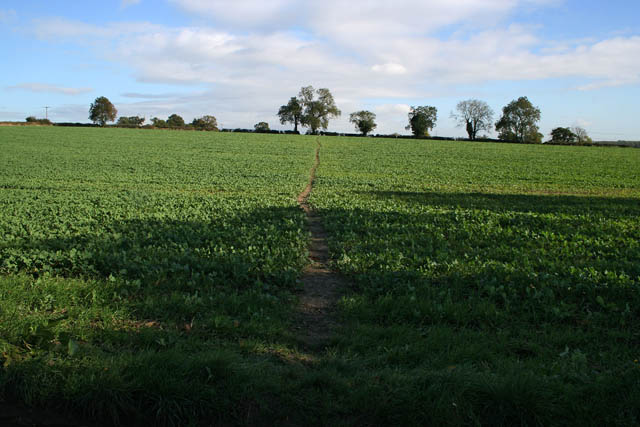 Footpath near Anstey Lane