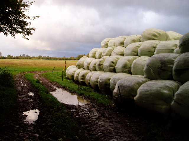 Bales of silage, Lyppiat Park