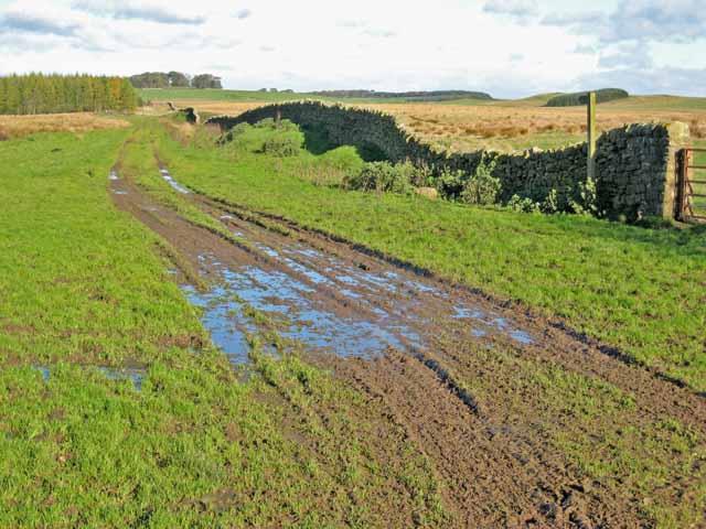 Bridleway near Hedchester