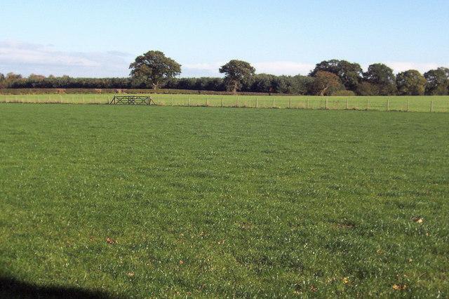 Byergates Field