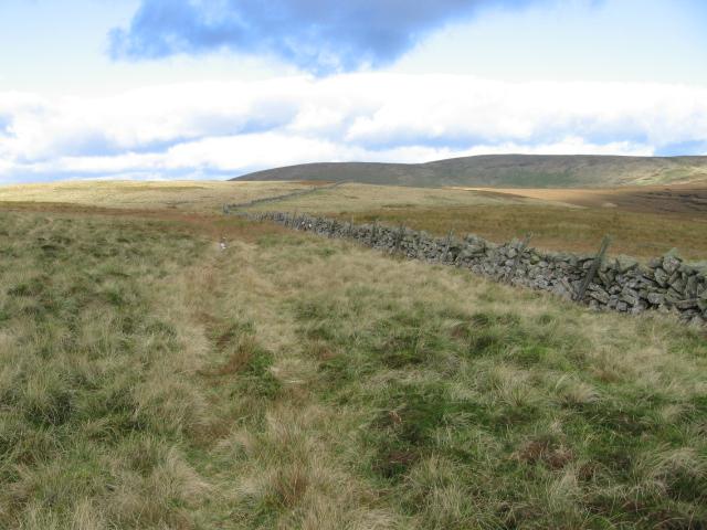 Wall below Colsnaur going across Menstrie Moss