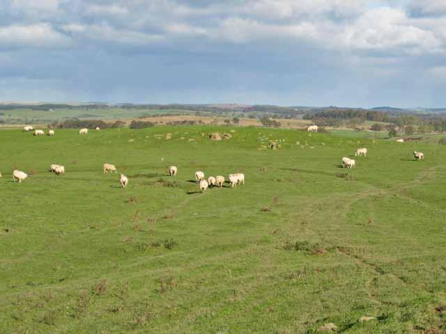 Pasture near Great Bavington