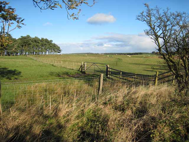 Fields near Cocklaw Walls