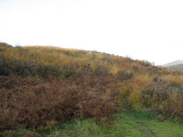 Bracken and Tussocky Grass