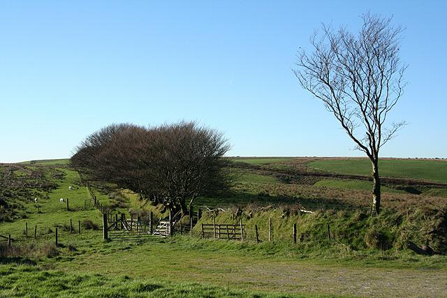 High Bray: towards Castle Common