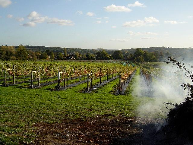 Bentley vineyard
