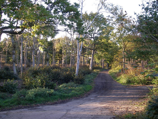 Ancient trackway between Grange and Lilly woods