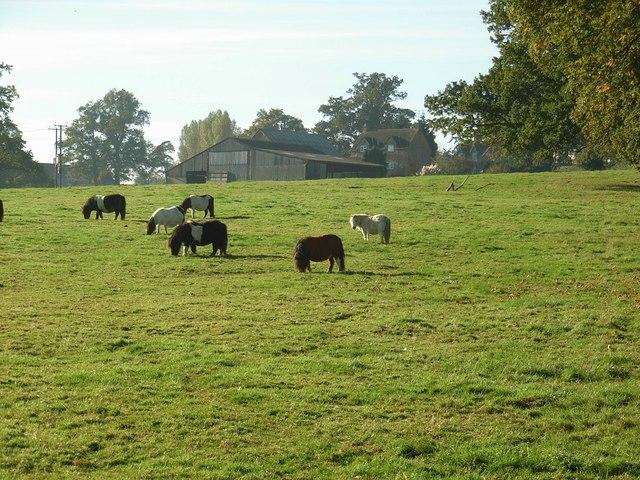 Little horses near Little Wolford