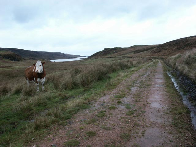 Track to Glenastle, Islay