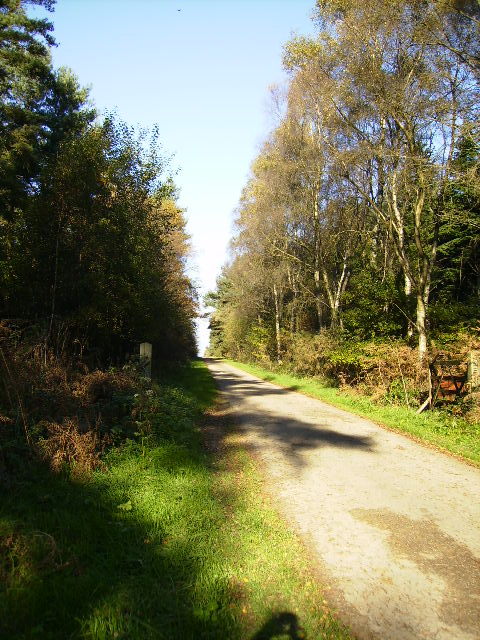 Track into the forestry at Grimston Moor