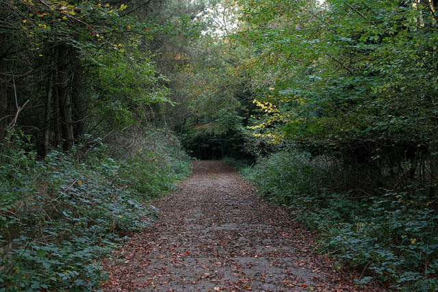 A walk through Twyford Wood: No 5