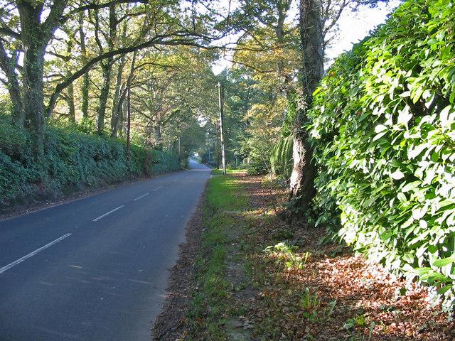 The road to Cranborne from Alderholt Dorset