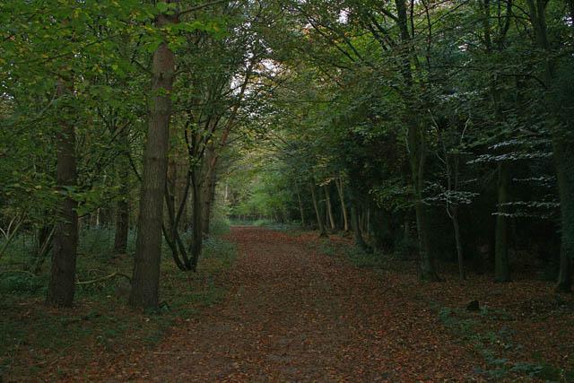 A walk through Twyford Wood: No 8