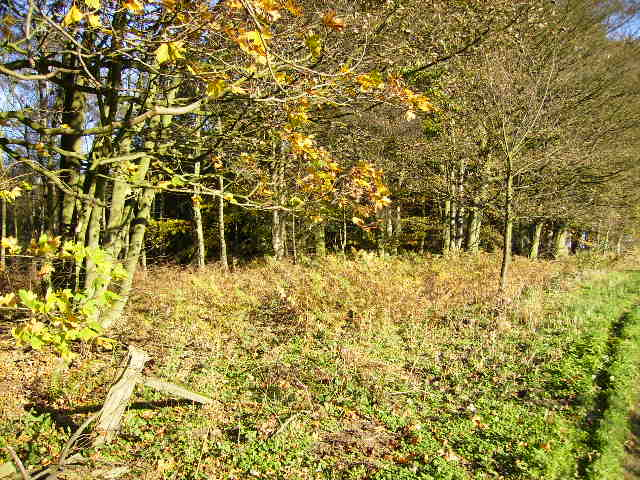 Woodland with autumnal flavour near Brandsby