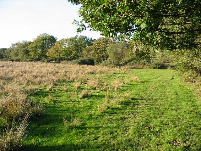 Rough pasture Alderholt Dorset