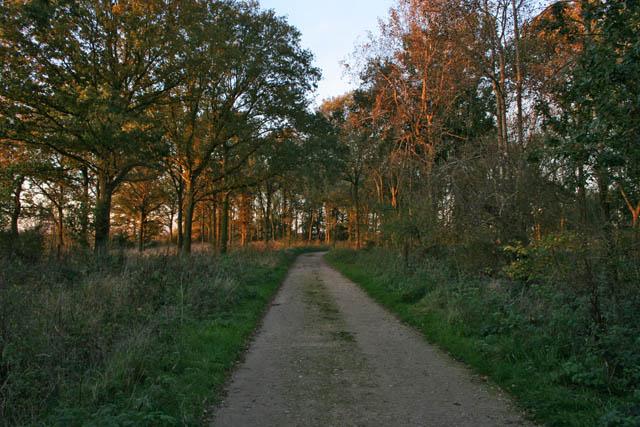 A walk through Twyford Wood: No 12