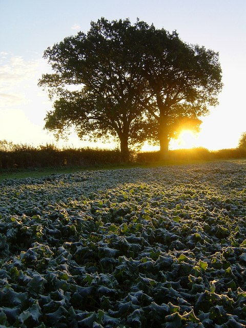 Frosty dawn, South Warnborough