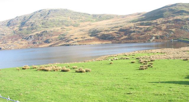 The water meadow by Llyn Cwmystradllyn