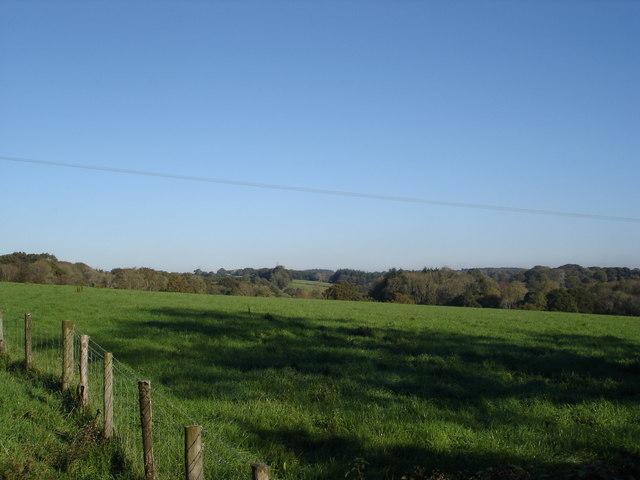 Field on Smallbridge Farm