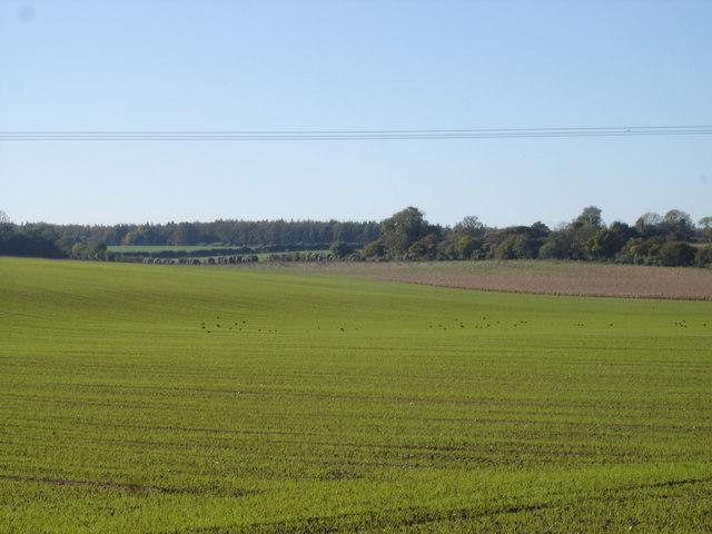 Farmland west of Edmondsham