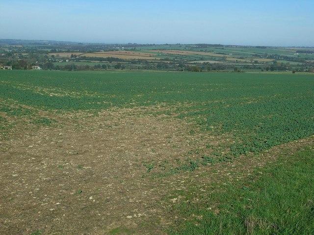 Oxfordshire fieldscape