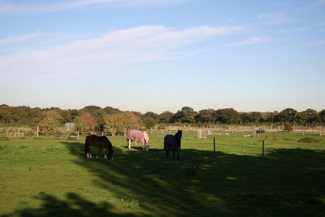 Ponies near Carisbrooke Manor