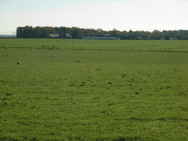 Grazing sheep and Forest Farm