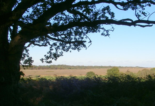 Forestry Commission's most easterly tree, overlooking Westwood marshes
