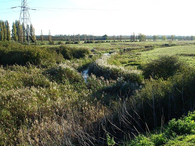 Reed-choked dyke near Swale Marina