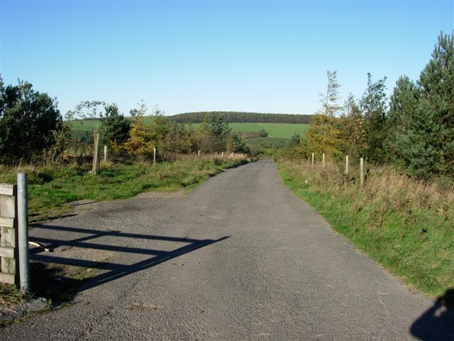 A plantation road on Stockley Fell