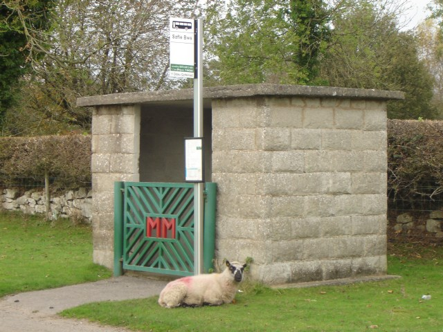 Sheep at bus shelter