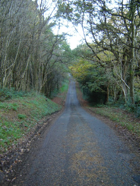 Forest lane in Coed Nercwys