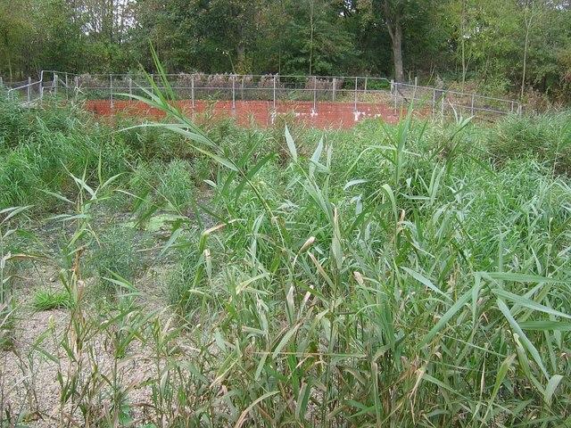 Reed beds, Brassington sewage works