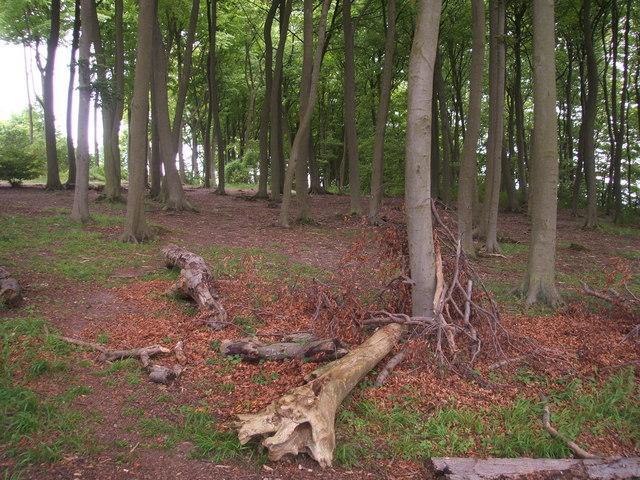 Fox Covert Nature Reserve