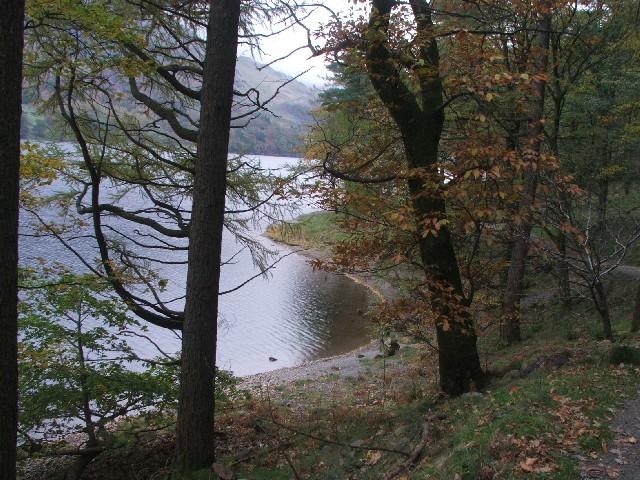 Burtness Wood beside Buttermere.