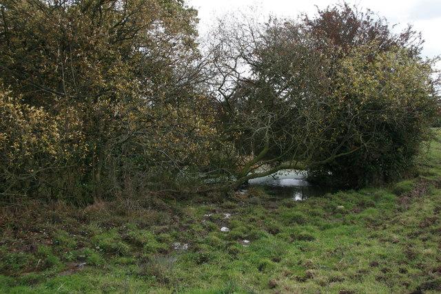 Small mere  near Tiverton, Cheshire