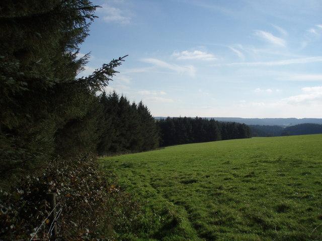 Woodland edge near Leigh Farm