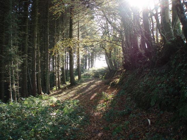 Woodland path near Leigh Farm