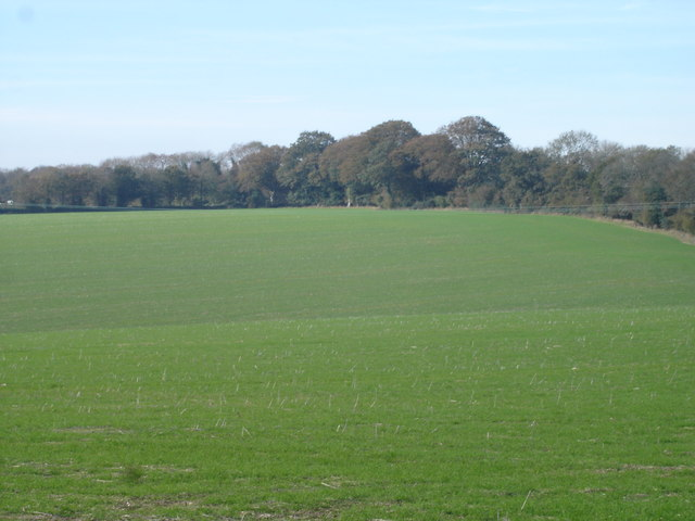 Down farm land towards Knighton Wood