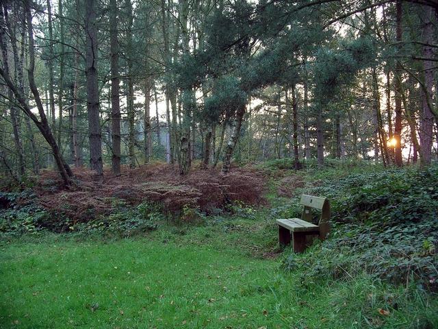 Bench, Sherwood Pines