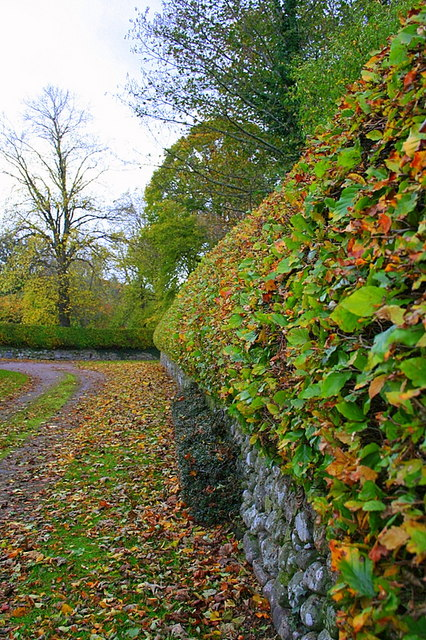 Mellow fruitfulness in the hedges of Earlsmill.