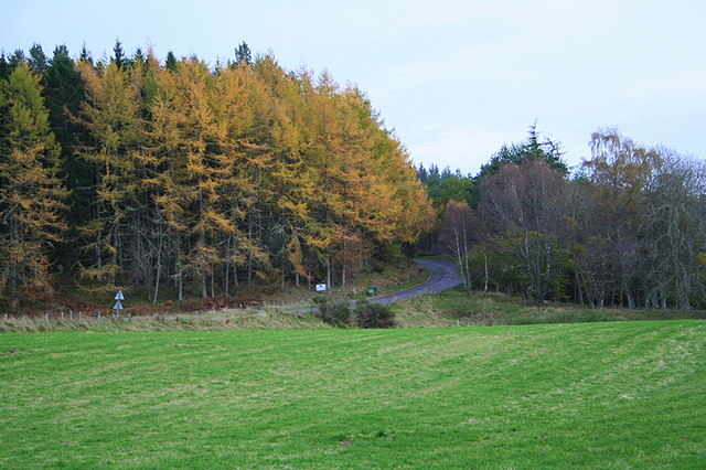 The A939 hugs Logie Wood on its southbound trail.